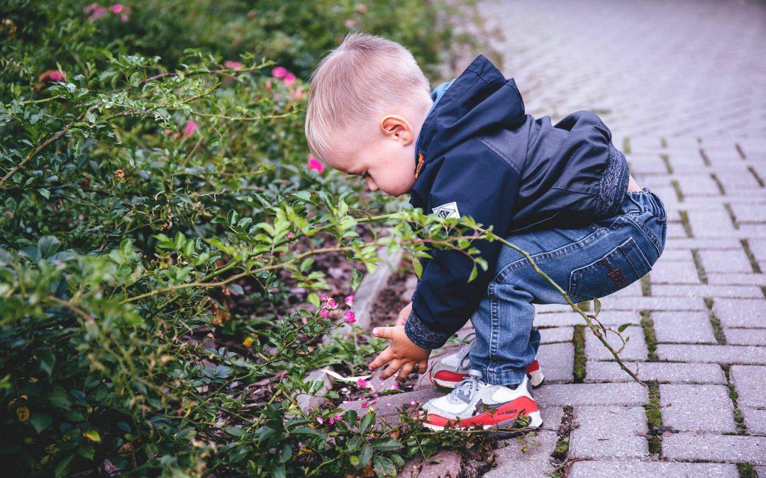 Alergija na polen – Polenska kijavica